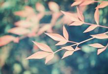 思绪被风打乱的句子,形容思绪被打断的句子